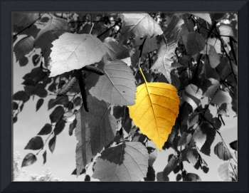 Photography For Sale - Golden Birch Leaf Still Lif