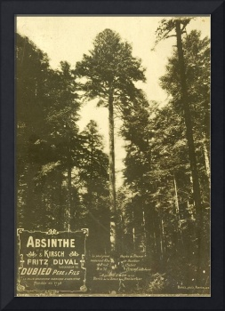 Absinthe Duval  and Pine Forest