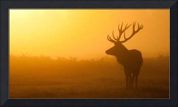 Misty Buck Deer At Sunrise
