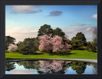 Cherry Tree Reflections