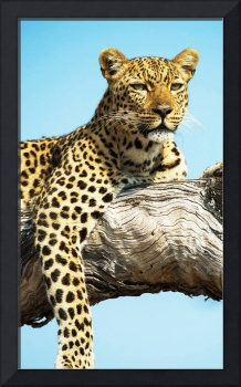 Zambia wildlife pictures