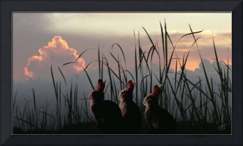 Rabbits at Twilight