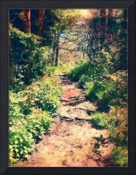 Light on a Woodland Path (pastel)
