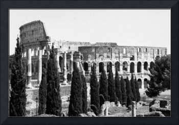Roman Coliseum with Cypress