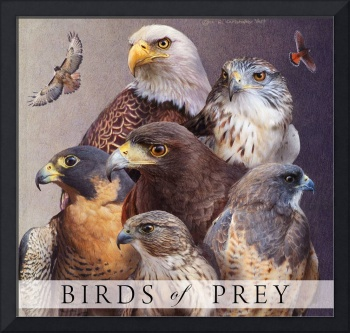 birds of prey poster