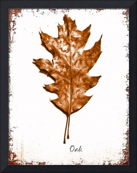 Oak Leaf No. 1