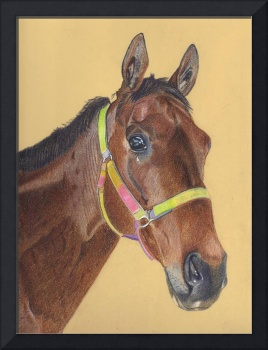 Thoroughbred Horse Colored Pencil Art