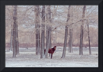 lonely horse in front of snowy winter forest