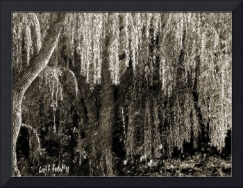 Graceful Weeping Willow Tree Meditation Wall Art