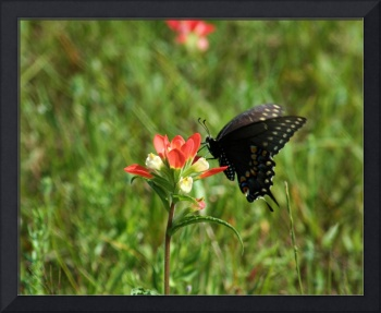 Wildflower and Butterfly