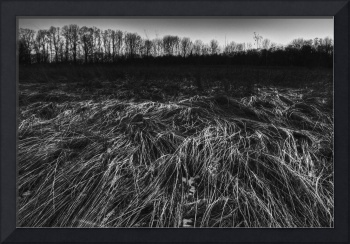 Winter Prairie in Black and White by Jim Crotty
