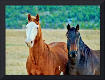 A Pair of Horses, horse photograph