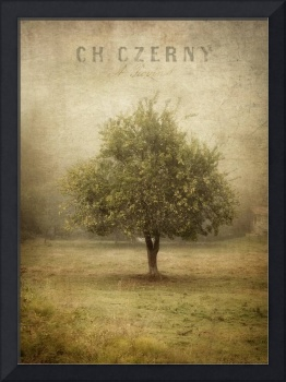 Apple Tree in Fog