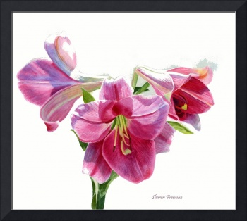 Bright Rose Colored Lilies