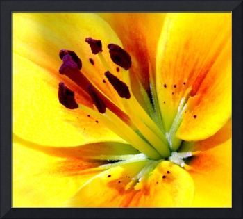 Abstract Macro Floral