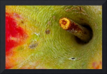 macro apple stem