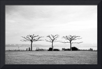 Dancing Trees at the Lake Constance