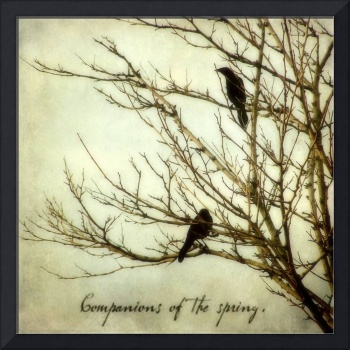 Companions of the Spring