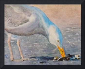 Herring Seagull with Cracked Clam