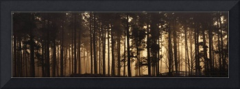 Woodland Sunrise Panorama