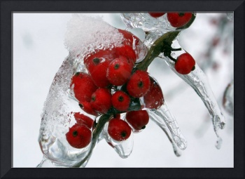 Berries Iced Over