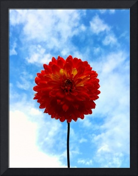 Flower in the sky
