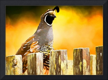 Quail on the Fence