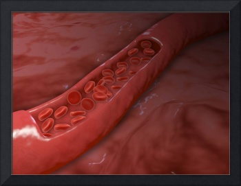 Artery cross section with red blood cell flow