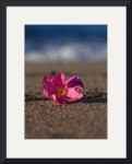 Cape Cod Beach Plumb Blossom by Christopher Seufert