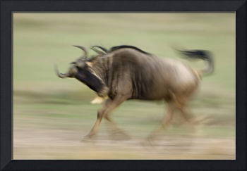 Side profile of a wildebeest running in a field