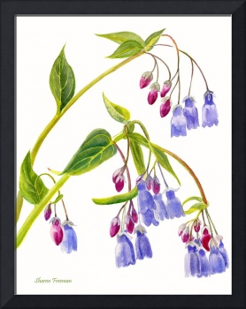 Mountain Bluebells, vertical design