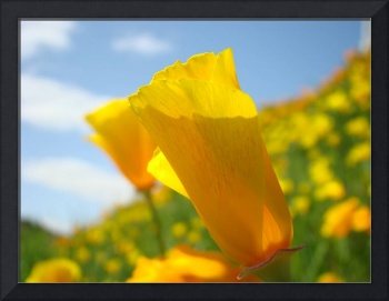 Christmas Gift Gallery POPPY Flower Meadow Art