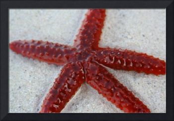 Surreal Starfish