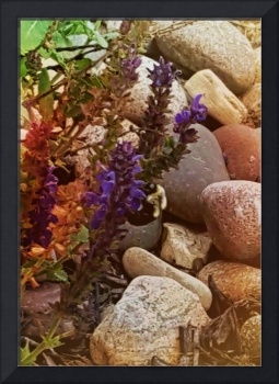 Bumblebee Pollinating Surrounded by Stones