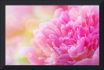 Peony with Canvas Effect