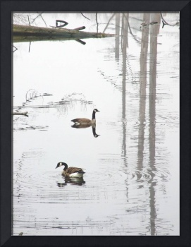 A Pair of Geese l