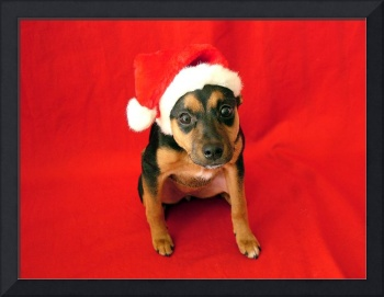 Veda with Santa Hat