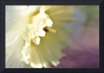 Daffodil Pastel Abstract