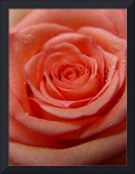 Roses Beauty Droplets