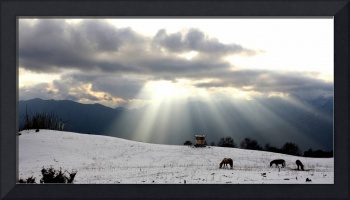 Horses Grazing In Field In Himalayas At Sunset