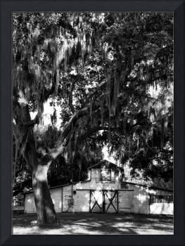 Shaded Barn, Oaks and Spanish Moss