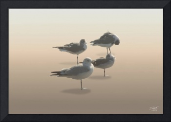 Seagulls in Sunset