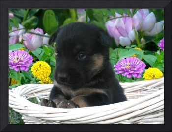 Floral basket and Puppy