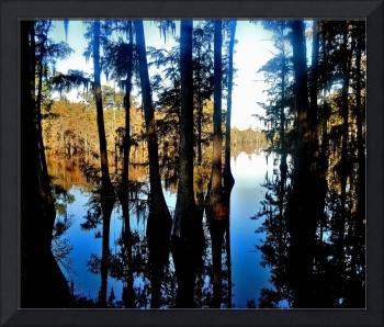 Louisiana Bayou w/ Cypress Trees and Spanish Moss