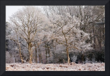 Frost on Trees Wall Art