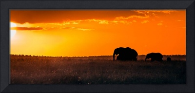 Morning on the Masai Mara 2