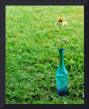 Coneflower in blue vase on a green grass backgroun