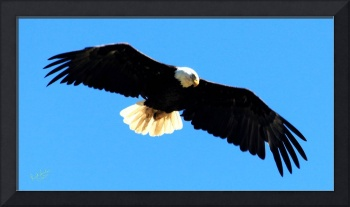 Eagle Look Two