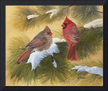 Cardinals And White Pine