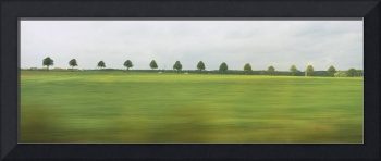Trees in a row viewed through a train window